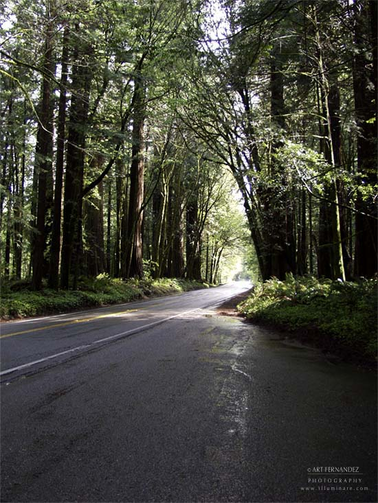 Avenue Of The Giants #1, 2001