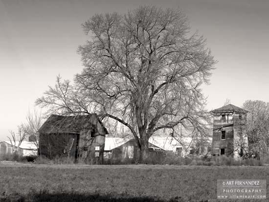 Barn & Oak, Patterson, CA, 2006