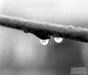 Rain Drop on a PeachTree, 2006