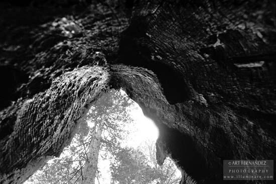 Redwood Hollow, Lady Bird Johnson Grove, 2006