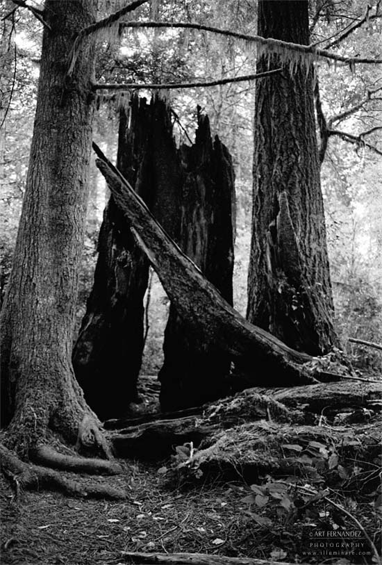 Echoes of a Giant, Lady Bird Johnson Grove, 2006