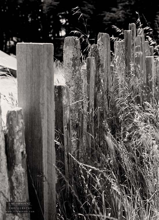 Fence & Wheat Field, Fort Ross, CA, 2006