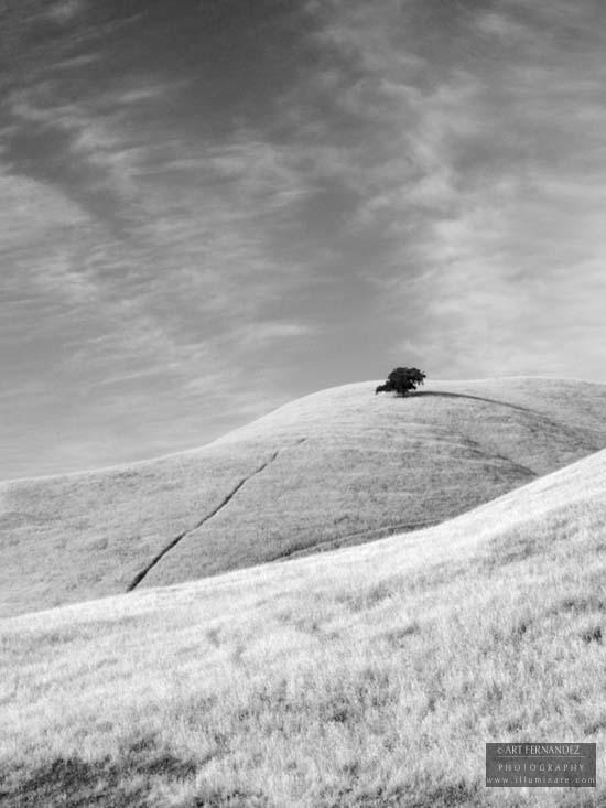 Oak in Solitude, Diablo Grande, 2006
