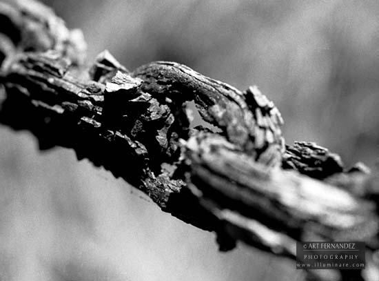 Rusted Chain, Spanish Bay, 2006