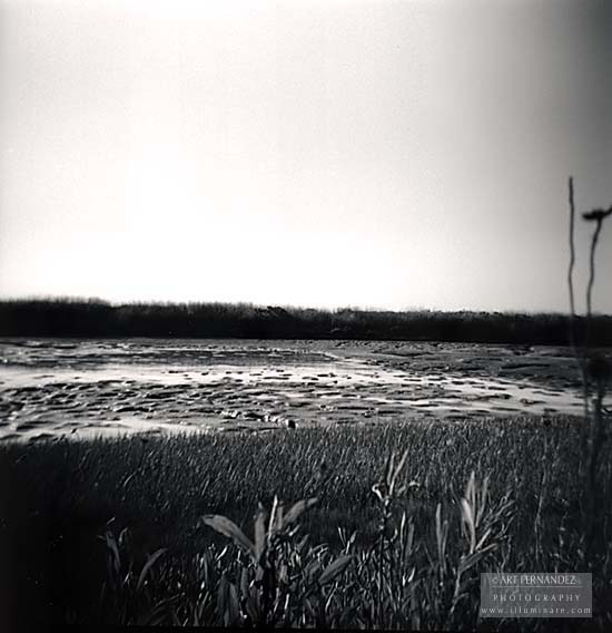 Marsh at Low Tide (Holga), Palo Alto, CA 2006